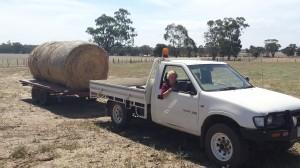 Jess carting round bales